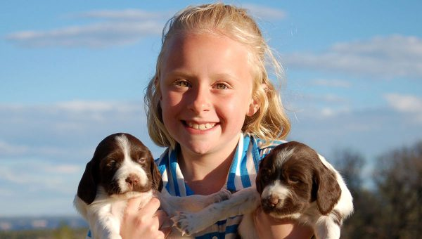 Hannah - Liver White Brittany Puppies