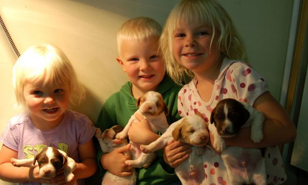 Brittany Puppy Helpers