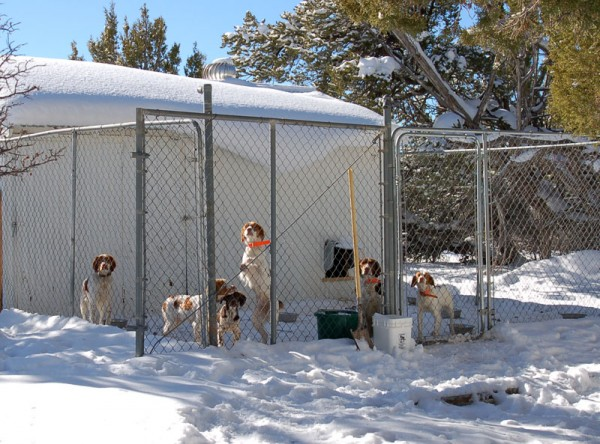 Warm Winter Kennels